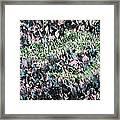 Lizard In The Grass  Framed Print