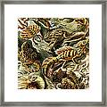 Lizards Lizards And More Lizards Framed Print