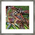 lobster season Re0027 Framed Print by Carey Chen