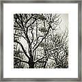 London Eye Through Snowy Trees Framed Print