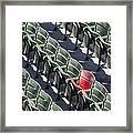 Lone Red Number 21 Fenway Park Framed Print