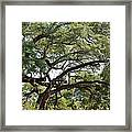 Long Branches Framed Print