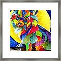 Long Haired Chihuahua Framed Print