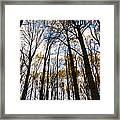Looking Skyward Into Autumn Trees Framed Print