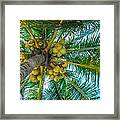Looking Up A Coconut Tree Framed Print