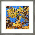 Looking Up To Yellow Leaves Framed Print