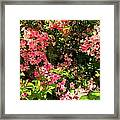Lost In Pink Framed Print