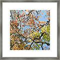 Lost Maples Framed Print