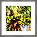 Lots Of Coconuts Framed Print