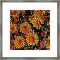 Lots Of Sunshine Framed Print