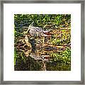 Louisiana Bayou 2 - Paint Framed Print