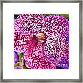 Orchid Lovely In Pink And White Framed Print