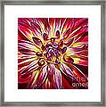 Lovely In Purple And Red - Dahlia Framed Print
