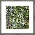 Lovely Lichens Framed Print