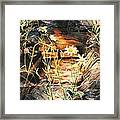 Loves Me Loves Me Not Framed Print by Melodye Whitaker