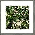 Lowland Tropical Rainforest Fan Palms Framed Print