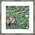 Lunch Time Photo A Framed Print