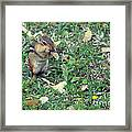 Lunch Time Photo B Framed Print