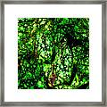 Lungwort Leaves Abstract Framed Print