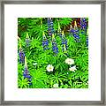 Lupines And Daisies 11 Framed Print