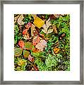 Luscious Lettuce Framed Print