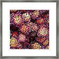 Lychee Fruit - Mercade Municipal Framed Print