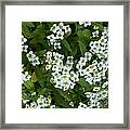 M White Flowers Collection No. W6 Framed Print