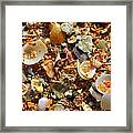 Macro Shells On Sand3 Framed Print