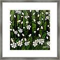 Magical Blooms Of The Deep Forest Framed Print