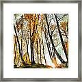 Magical Forest - Drawing Framed Print