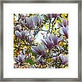 Magnolia Maidens In A Border Framed Print