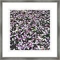 Magnolia Petals Framed Print