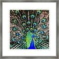 Majestic Blue Framed Print