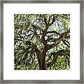 Majestic Oak 3 Framed Print