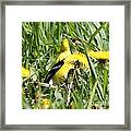 Male American Goldfinch Camouflage Framed Print