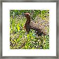 Male Ptarmigan Along Savage River Trail In Denali Np-ak Framed Print