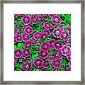 Many Blooms Framed Print