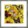 Many Butterflies On Mums Framed Print