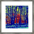 Many Trees II Framed Print