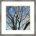 Maple Glazed  Framed Print