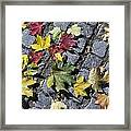 Maple Leaves On Stones Framed Print