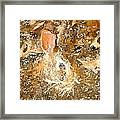 March 025 0 Rabbit Eyes Looking Framed Print