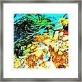 Mellow Yellow 80 Framed Print