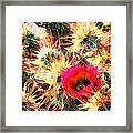 Mesh Of Cactus Needles Framed Print