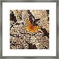 Metamorphous Framed Print