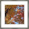 Mezmerizing Mix Of Color And Texture Framed Print
