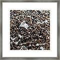 Mica Trial Gold With Pearl Framed Print