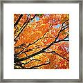 Michigan Sugan Maple Framed Print