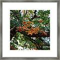 Mighty Fall Oak #1 Framed Print
