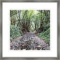 Miller Grove 2013 Horizontal Framed Print